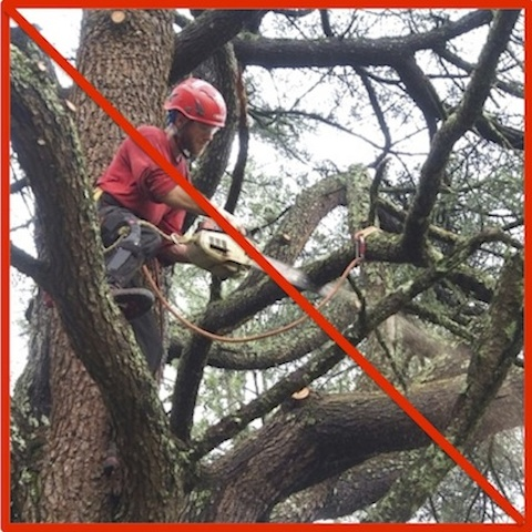 WHY USE US?We don't do tree work.