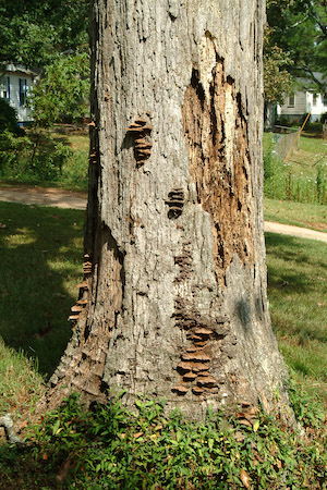 Missing bark on trunk
