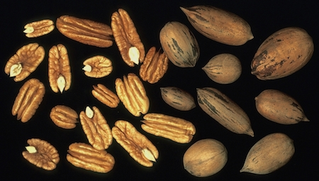 Mature nuts